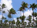 Palm grove Royalty Free Stock Image