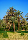 Palm grove Stock Photo