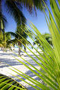 Palm Grove Foliage Stock Photography