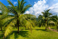 The palm grove in thailand Royalty Free Stock Photography