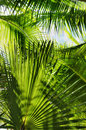 Palm Jungle Stock Images