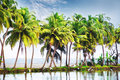 Palm ladscape blue sky tropic landscape at and trees island Royalty Free Stock Images