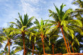 Palm ladscape trees at blue cloudy sky Royalty Free Stock Images