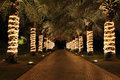 Palm lane in night illumination Stock Photo