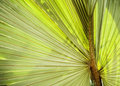 Palm Leaf Background Royalty Free Stock Photo