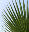 Palm leaf on a background of blue sky Stock Image