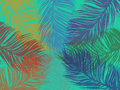 Palm leaf background colorful Royalty Free Stock Photo