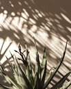Palm leaf beautiful shadows on the wall. Creative, minimal, styled concept for bloggers Royalty Free Stock Photo
