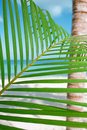 Palm leaf, blue sea and tropical white sand beach
