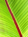 Palm Leaf Close-Up Stock Image