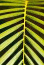 Palm leaf close up Stock Images