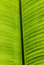 Palm leaf close up of a Stock Photos