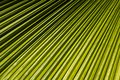 Palm leaf closeup tropical pattern and texture Stock Photo