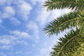 Palm Leaf On The Fresh Blue Sky