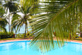 Palm leaf in front of swimming pool by sea Royalty Free Stock Photo