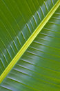 Palm leaf green nature image Stock Image