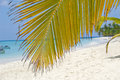 Palm leaf hanging over exotic beach at saona island Stock Photos