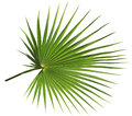 Palm Leaf Isolated On White Ba...