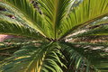 Palm leaf in the jungle Royalty Free Stock Photos