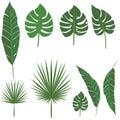 Palm leafs diy set for decoration