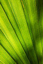 Palm leaf macro shot of a vibrant tree Stock Image