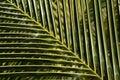 Palm leaf pattern Royalty Free Stock Photo