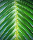 Palm leaf pattern Royalty Free Stock Photo