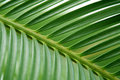 Palm leaf perspective Royalty Free Stock Photography