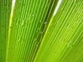 Palm Leaf With Rain Drops