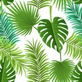 Palm leaf seamless pattern for tropical background Royalty Free Stock Photo