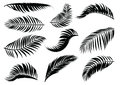 Palm Leaf silhouette. Royalty Free Stock Photo