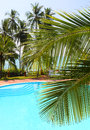 Palm leaf and swimming pool in front of the by the sea on a tropical resort Stock Image