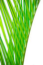 Palm leaf texture Stock Images