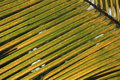 Palm leaf texture details in sun light close up of twigs bright Stock Images