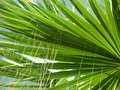 Palm leaf textures Stock Images