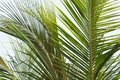 Palm leaf tree