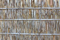 Palm Leaf Wall Texture