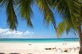 Palm leafs on caribbean sea, Saona Royalty Free Stock Photos