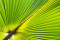 Palm leave green pattern texture Royalty Free Stock Photo