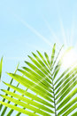 Palm leaves against a  summer sky Royalty Free Stock Images