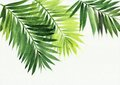Palm leaves background Royalty Free Stock Photo