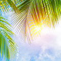 Palm leaves border fresh green tree on blue cloudy sky background sunny day beautiful natural wallpaper summer holidays concept Stock Photo