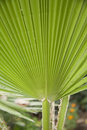Palm leaves close up Stock Images