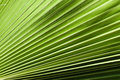 Palm leaves detail green background of close up lines and shadows pattern Stock Photos
