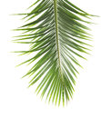 Palm leaves Royalty Free Stock Photo