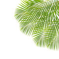 Palm leaves green fresh isolated on white backgrouns Stock Photos