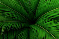 Palm leaves green pattern, abstract tropical background. Royalty Free Stock Photo