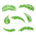 Palm leaves isolated on a white background illustration Royalty Free Stock Photography