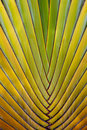 Palm leaves.  Mexico Royalty Free Stock Photos