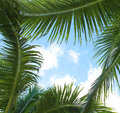 Palm leaves and the sky frame vacation Royalty Free Stock Photos